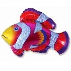 Рыбка-Клоун